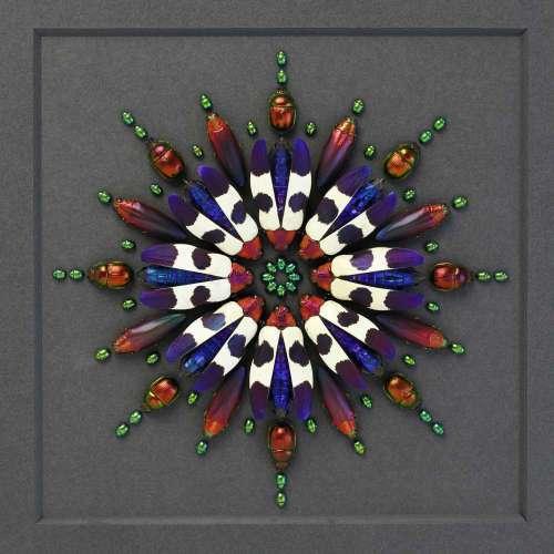 Buquetti Prism | Pheromone | Exquisite Beetle Beauty