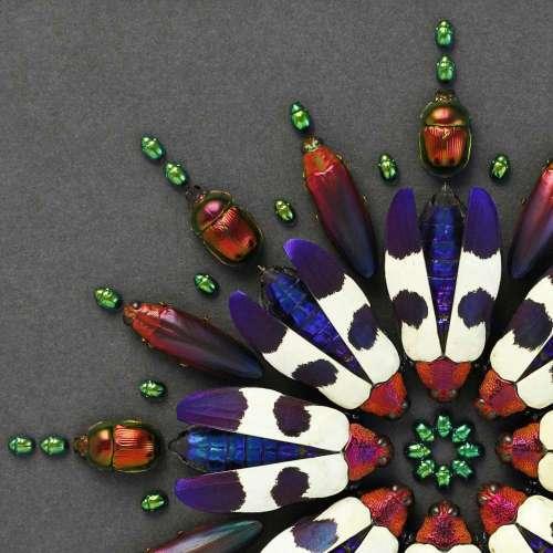 Buquetti Prism   Pheromone   Exquisite Beetle Beauty