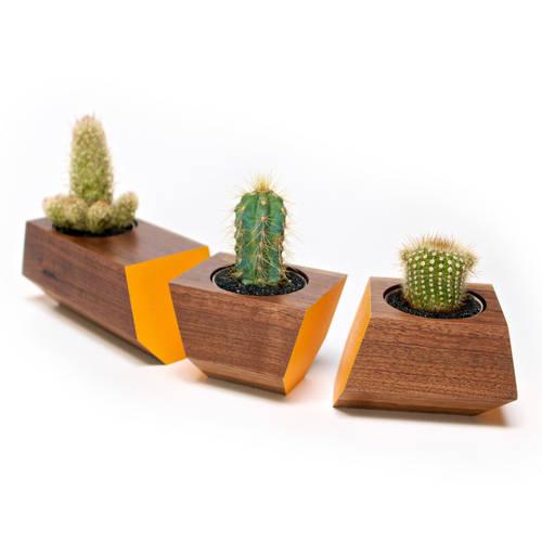Boxcar Set Walnut & Orange - Succulent Planter Set with a Clear Finish