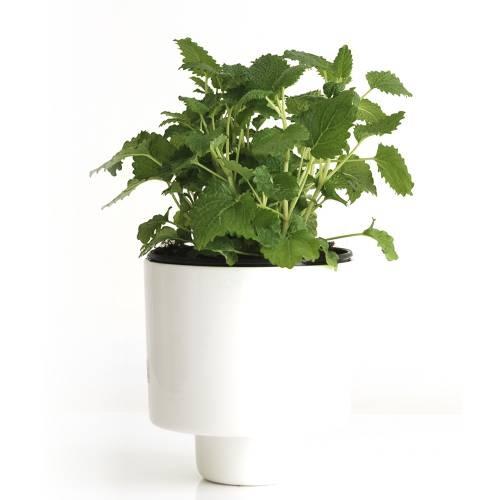 U-Herb Indoor Garden | IntoConcrete