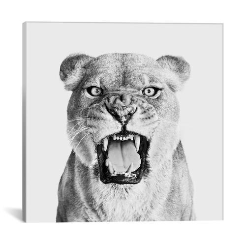 Lioness Roar In B&W