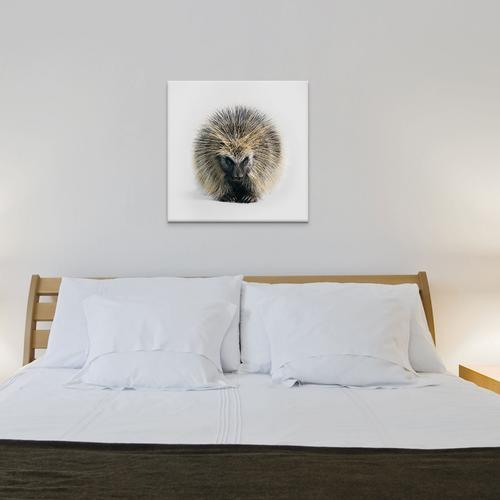North American Porcupine I