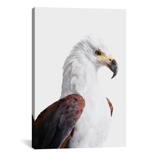 African Fish Eagle I