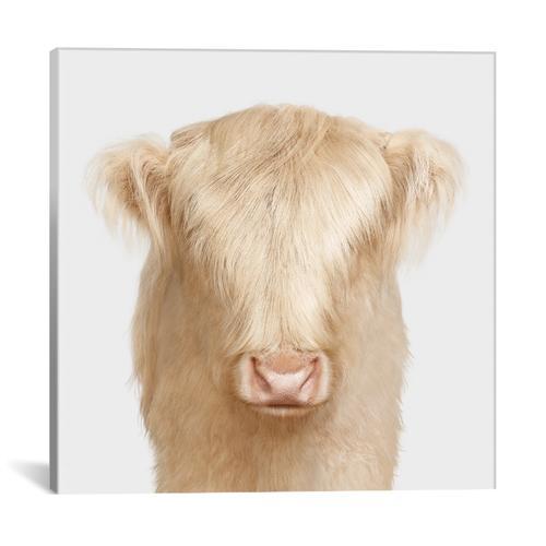 Highland Cow Babe